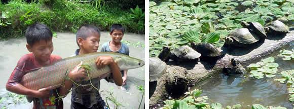 Fuente: Blog de la Ciudad de Iquitos. Imágenes de la Reserva Pacaya Samiria.